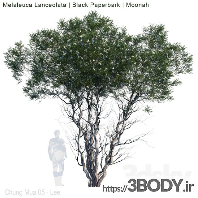 مدل سه بعدی درخت و درختچه درخت جوان عکس 1