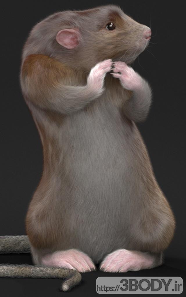آبجکت سه بعدی گربه و موش عکس 3