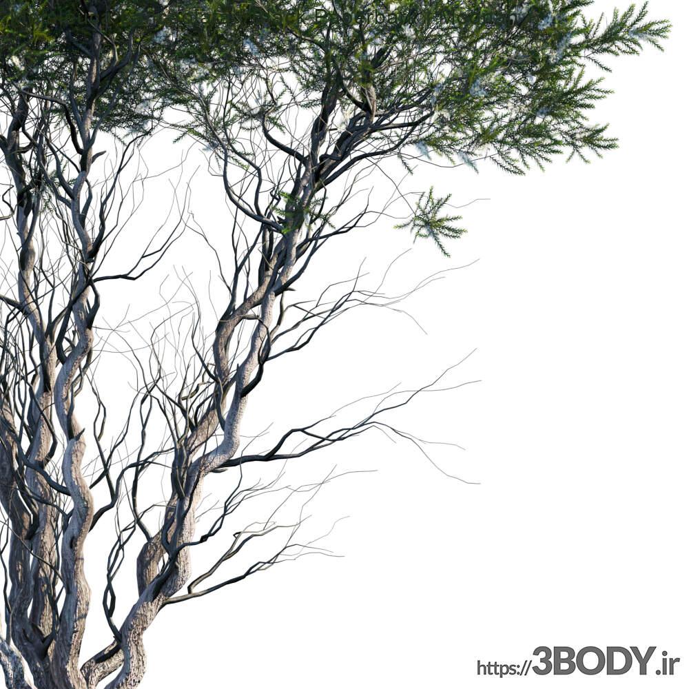 مدل سه بعدی درخت و درختچه درخت جوان عکس 2
