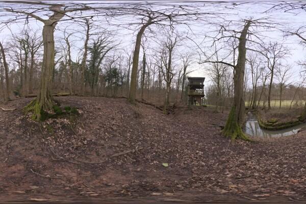 فایل HDRI خارجی جنگل پاییزی 03 عکس اصلی