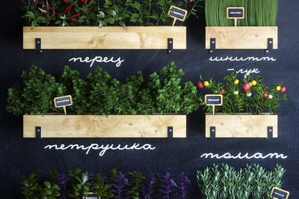 آبجکت سه بعدی گیاهان اشپزخانه عکس اصلی