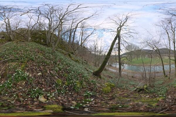 فایل HDRI جنگل بهاری عکس اصلی