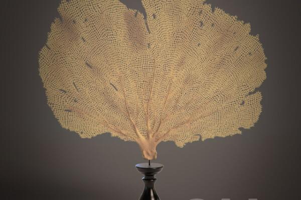 مدل سه بعدی تندیس مرجان عکس اصلی