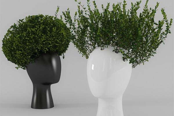 آبجکت سه بعدی ست تزئینی گیاه آپارتمانی عکس اصلی
