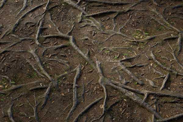 متریال زمین جنگل forest ground عکس اصلی