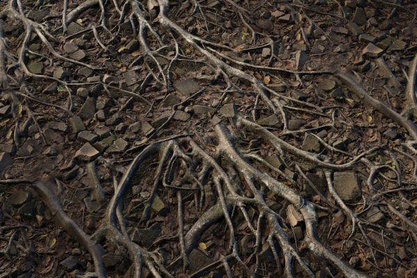 متریال زمین جنگل عکس اصلی