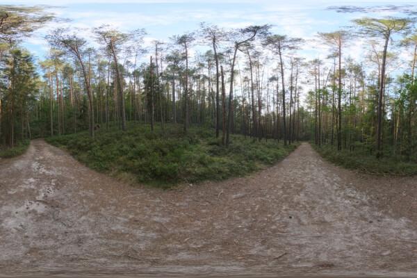 فایل HDRI خارجی جنگل غروب آفتاب عکس اصلی