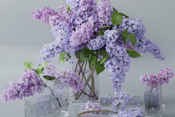 آبجکت سه بعدی دسته گل بنفشه عکس اصلی