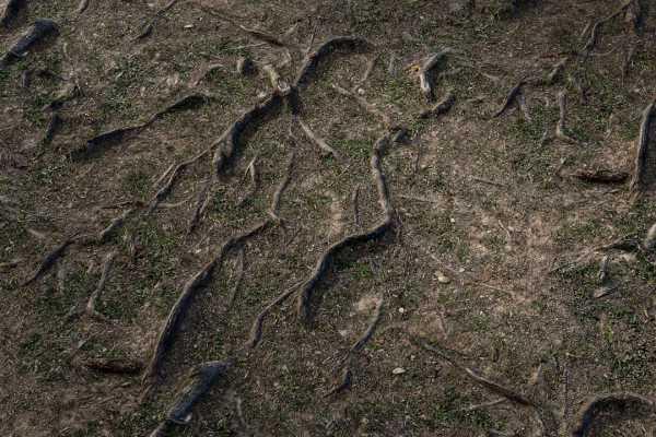 متریال و تکسچر اماده پی بی ار pbr کیفیت بالا زمین جنگل عکس اصلی