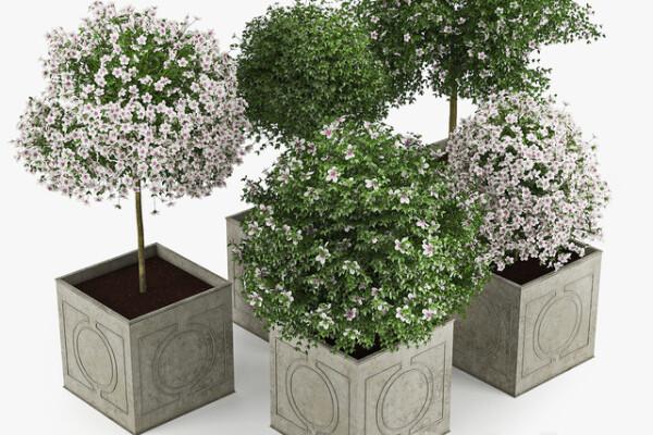 آبجکت سه بعدی گل  هبیسکوس عکس اصلی