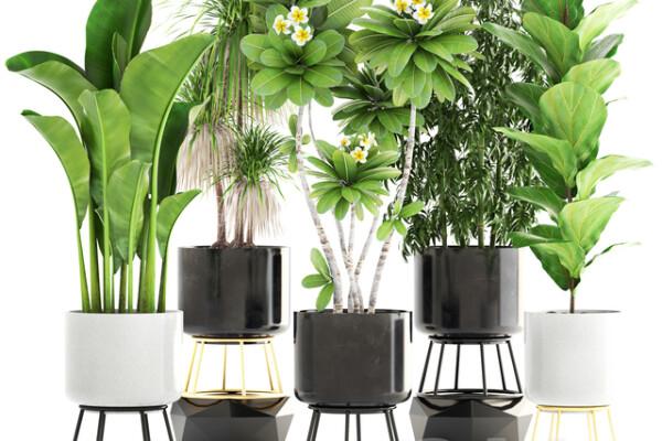 ابجکت سه بعدی مجموعه گیاهان گلدانی و زینتی عکس اصلی