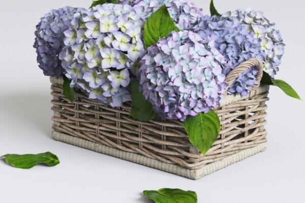 آبجکت سه بعدی سبد گل هیدرانگا عکس اصلی