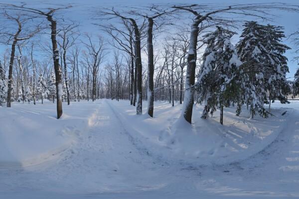 فایل HDRI خارجی مسیر جنگل برفی 01 عکس اصلی
