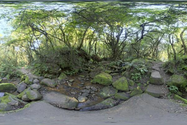 فایل HDRI خارجی جنگل خزه ای عکس اصلی