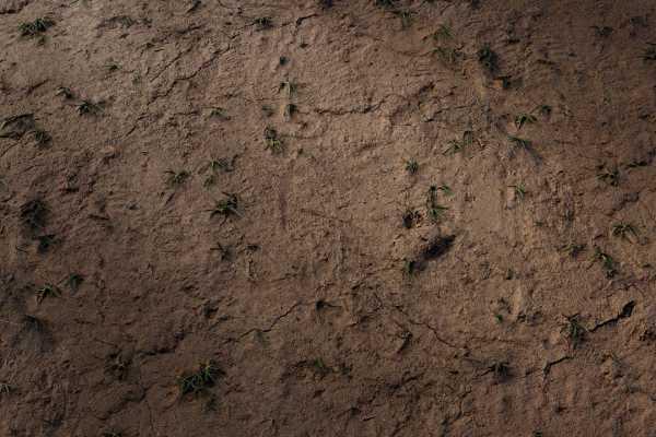 متریال چمن خشک شده dried grass عکس اصلی
