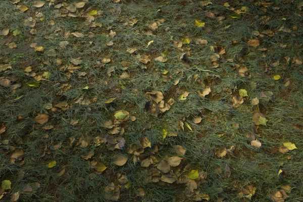 متریال چمن uncut grass عکس اصلی