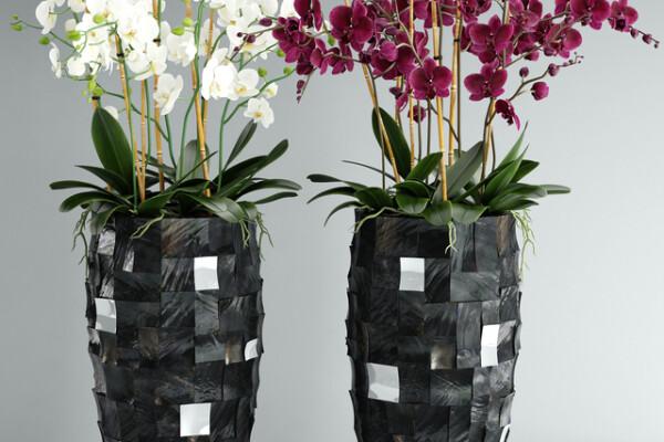 آبجکت سه بعدی دسته گل ارکیده دکوری عکس اصلی