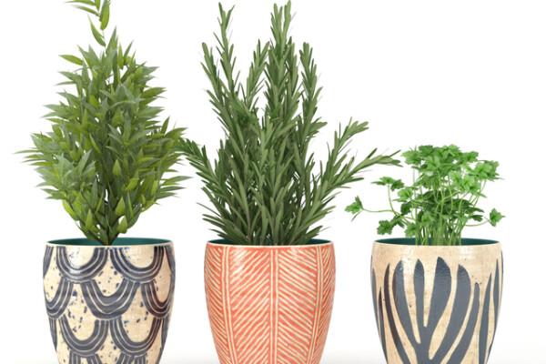 آبجکت سه بعدی سبزیجات گلدانی عکس اصلی