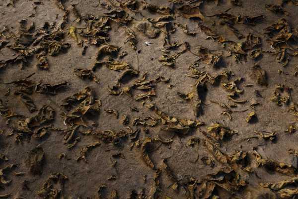 متریال آوار طبیعی debris nature عکس اصلی
