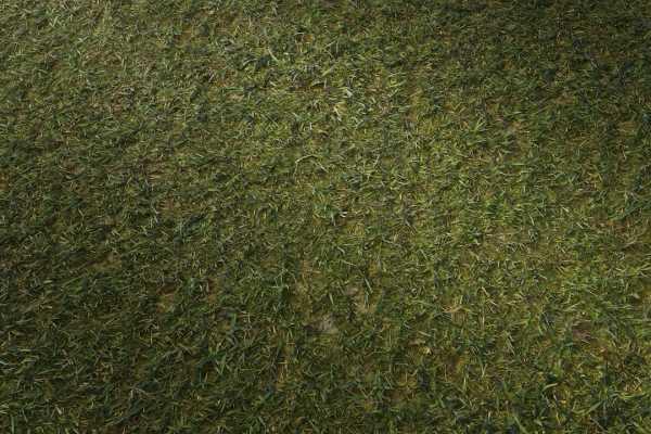 متریال چمن کوتاه شده cut grass عکس اصلی