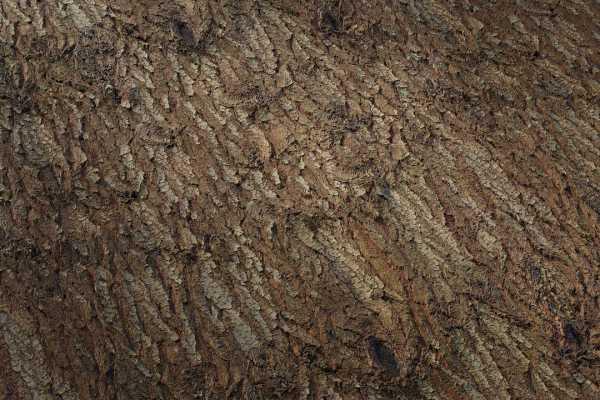 متریال پوست درخت کاج Pine tree bark عکس اصلی