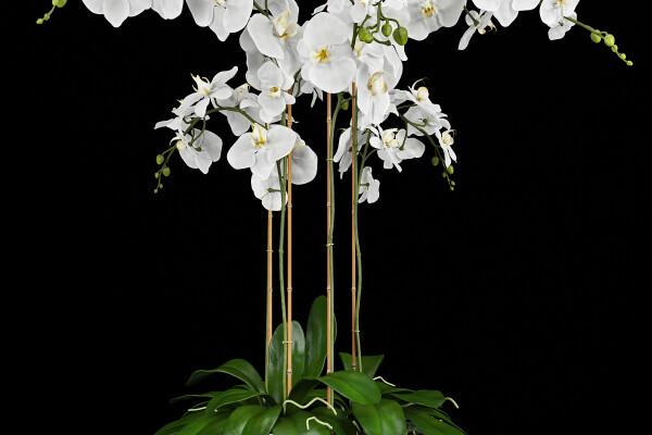 آبجکت سه بعدی گل و گلدان ارکیده عکس اصلی