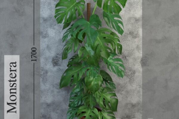آبجکت سه بعدی گل مونسترا عکس اصلی