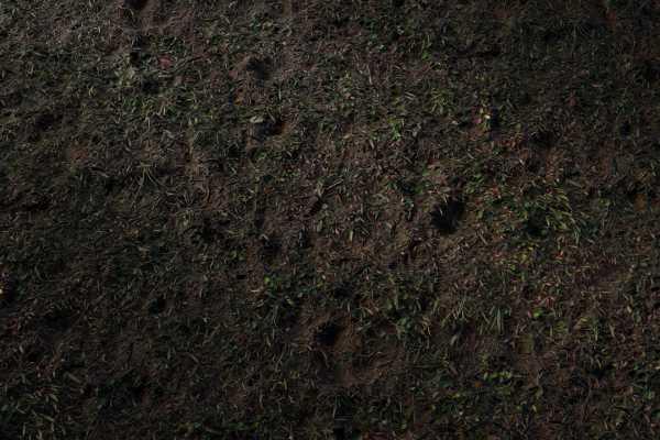 متریال چمن وحشی wild grass عکس اصلی