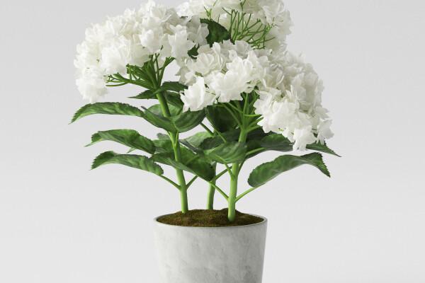 آبجکت سه بعدی گل ادریسی سفید عکس اصلی