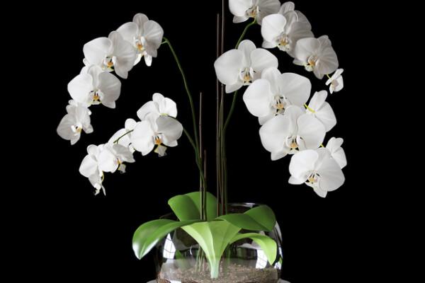 آبجکت سه بعدی گل ارکیده سفید عکس اصلی