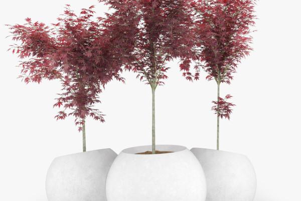 آبجکت سه بعدی گل افرا ژاپنی عکس اصلی