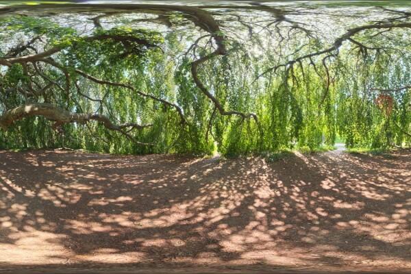فایل HDRI درخت سرسبز عکس اصلی