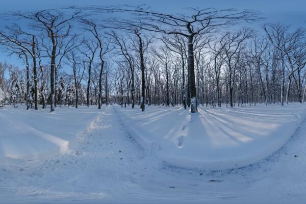 فایل HDRI خارجی مسیر جنگل برفی 02 عکس اصلی