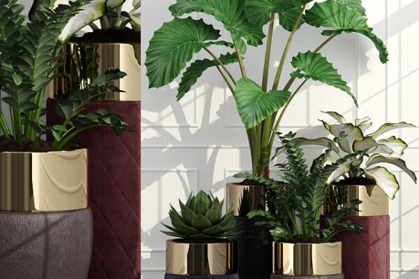 آبجکت سه بعدی گل لانگی گادوین عکس اصلی