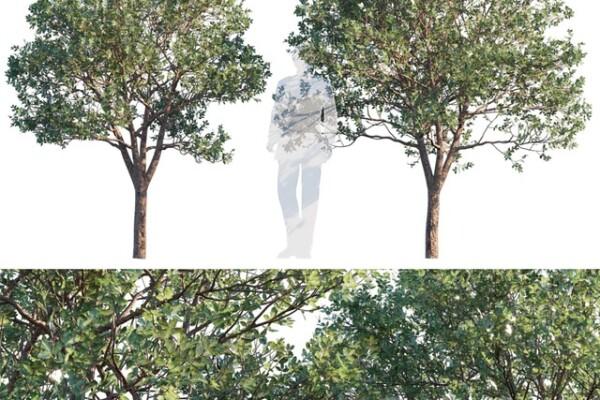 مدل سه بعدی درخت و درختچه عکس اصلی