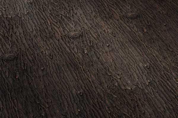 متریال پوست درخت بید Willow bark عکس اصلی