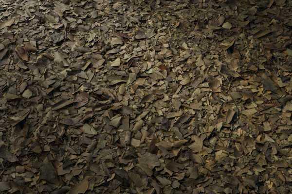 متریال گیاهان آوار debris plants عکس اصلی