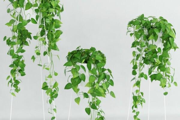 آبجکت سه بعدی ست تزئینی گیاه آویزان عکس اصلی