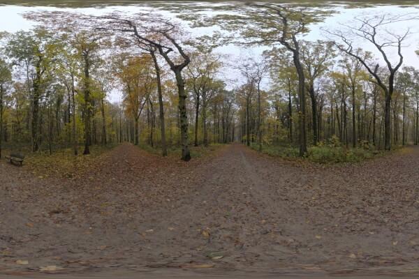 فایل HDRI طبیعت جنگل عکس اصلی
