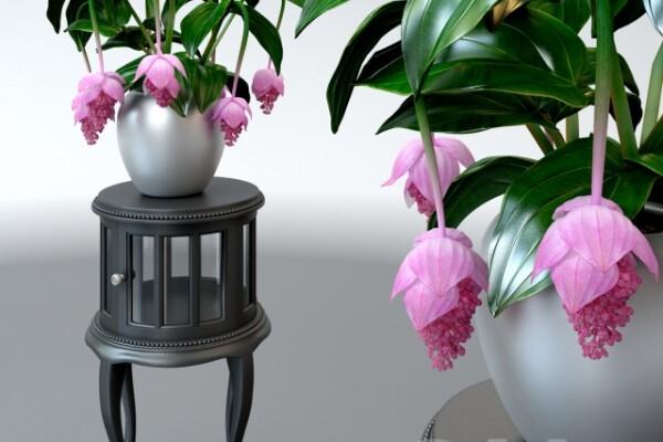 آبجکت سه بعدی  دسته گل رومیزی عکس اصلی