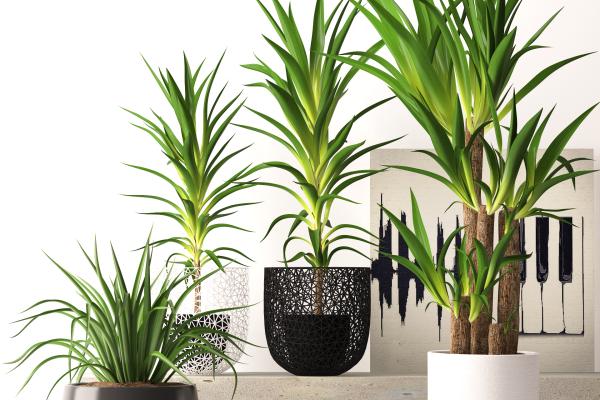 آبجکت سه بعدی ست گیاهان خانگی عکس اصلی