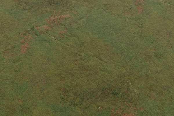متریال خزه سنگ rock moss عکس اصلی